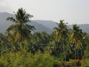 india-otchet-2010-site-77