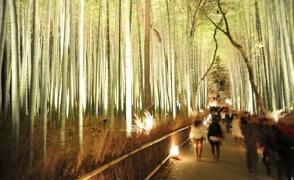 Бамбуковый лес в Арасияме