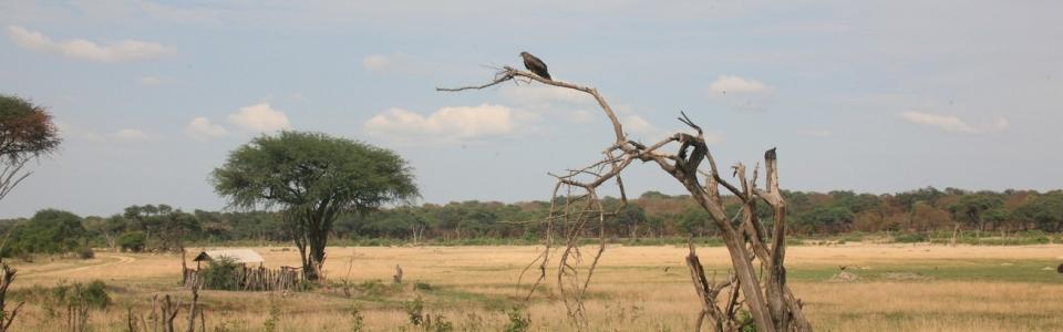 Свазилен Лесото Зимбабве