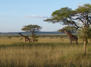 Танзания-Килимаджаро